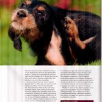 freelance copywriting for pet magazine